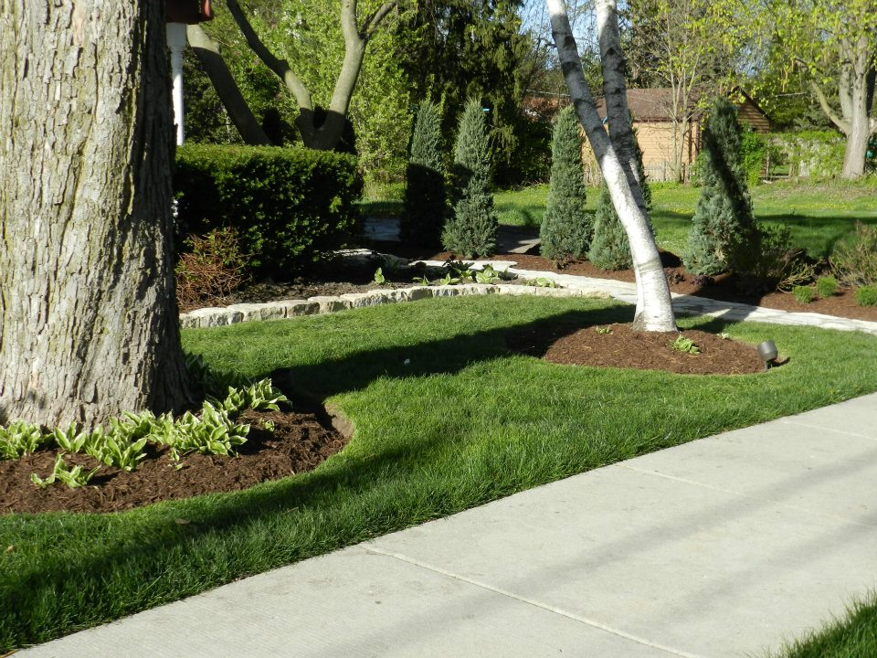 Round mulch beds around trees with greenery design project.