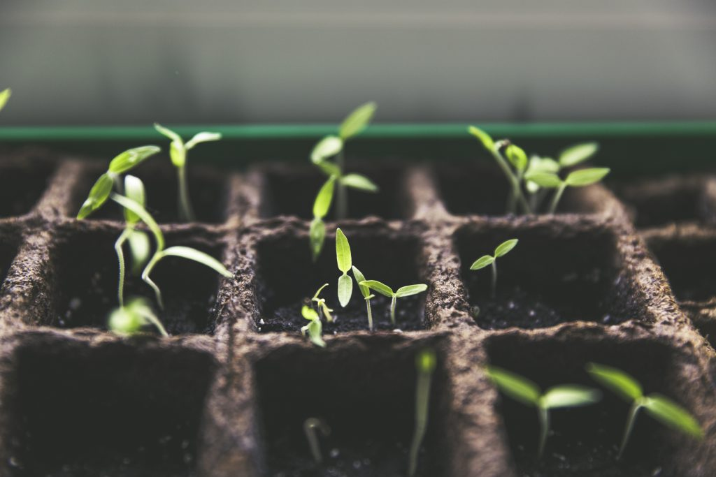 March Garden Prep: What You Should Be Doing This Month